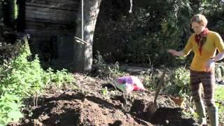 The Blueberry Garden