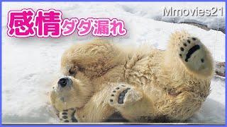 八つ当たりする姿が人間っぽいホッキョクグマ【リラ】雪面を走る姿は何度見ても美しい