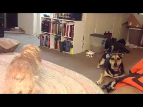 big dog small apartment youtube. Black Bedroom Furniture Sets. Home Design Ideas