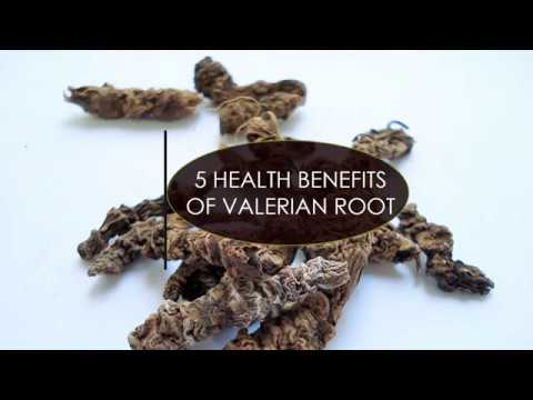 5 Amazing Health Benefits of Valerian Root!