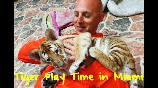 Meet The Baby Bengal Tiger at Miami's Zoological Wildlife Foundation