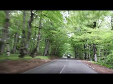 Дорога в лесу Сабадури