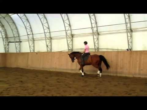 Bungee Dressage Training Level Youtube
