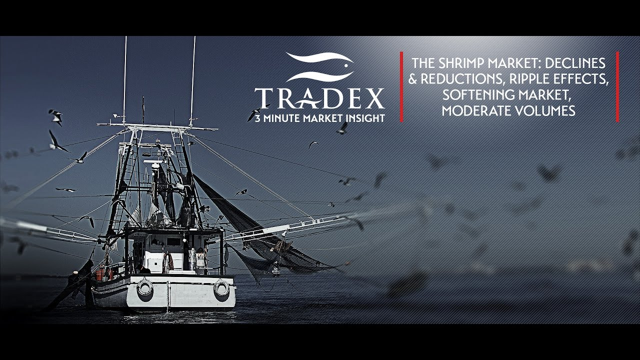 3mmi The Shrimp Market Declines Reductions Ripple Effects