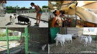 Отдых с детьми недалеко от Киева: животные в конно-спортивном клубе