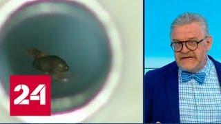 Шнобель-2018: лечение слюной и диета каннибала - Россия 24