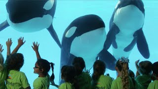 This is the True Story of SeaWorld | SeaWorld®