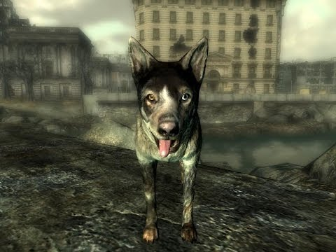 Fallout 3 - How To Get Dog Follower (DogMeat)