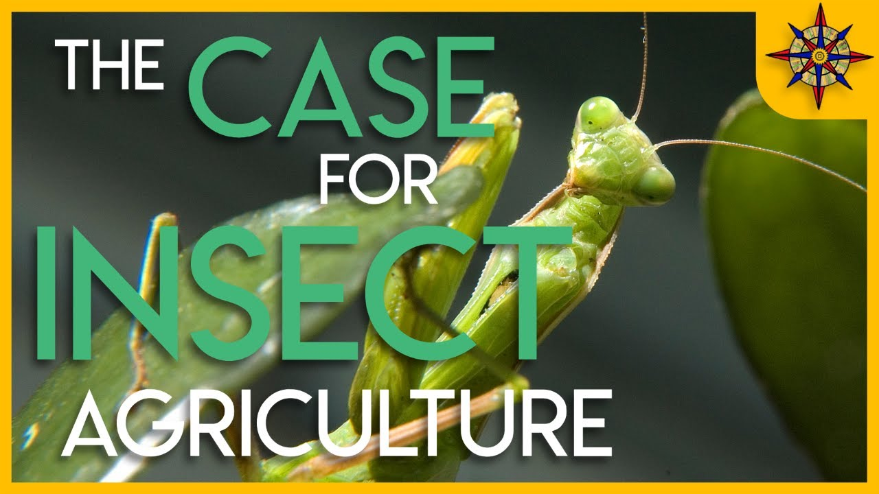 The Case for Insect Agriculture