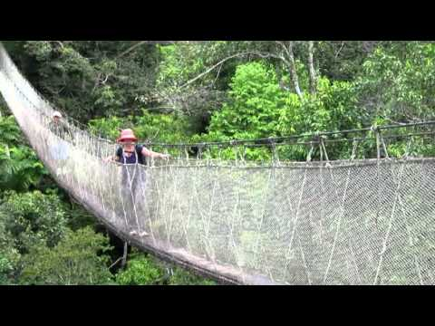 Peru 2012 - Part 8 - Rainforest Canopy Walk & Peru 2012 - Part 8 - Rainforest Canopy Walk - YouTube