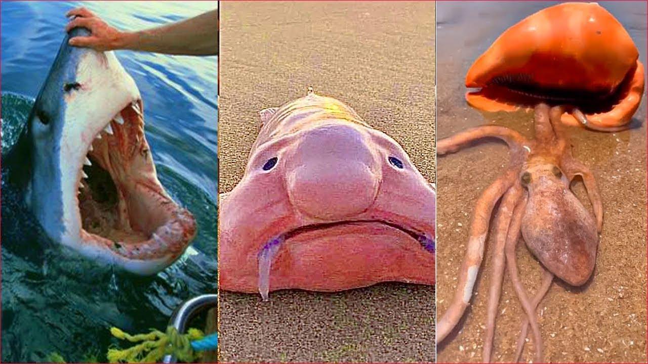 Catching Seafood 🦀🐙 ASMR Relaxing (Catch Shark , Catch Fish ,Deep Sea Monster ) - Tik Tok #230