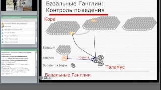 Лекция Сознание и подсознание 28 03 2014 г.