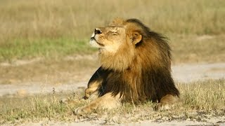Lessons from #CeciltheLion? Brian May and Rosamund Urwin - Newsnight