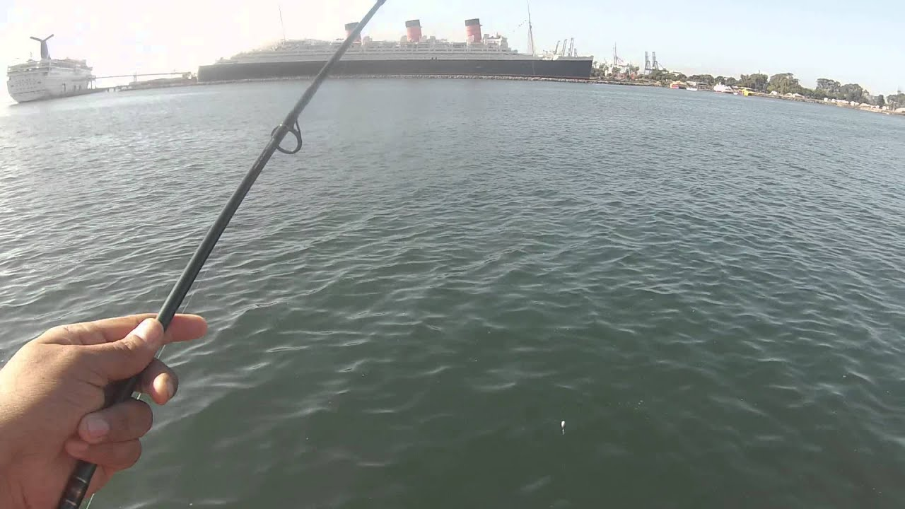 Mackarel fishing in long beach september 2014 youtube for Queen mary fishing report