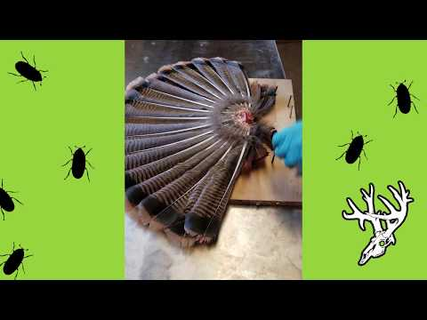 Removing, Cleaning, and Mounting a Turkey Fan | Turkey Mounting 101