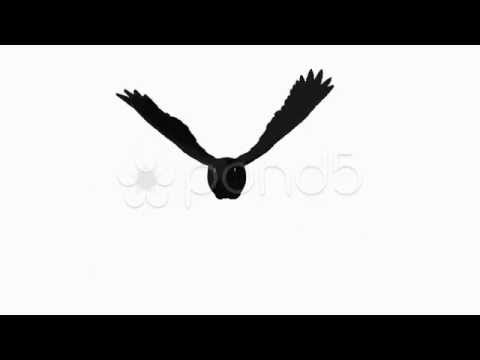 Crow Flying Animation