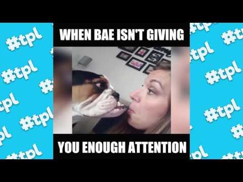 When Bae Isn't Paying You Enough Attention | #thatpetlife