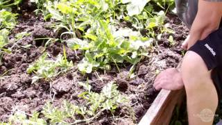 How To Grow A Organic Vegetable Garden Summer Time #2