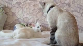 Кошачья любовь (love cats)