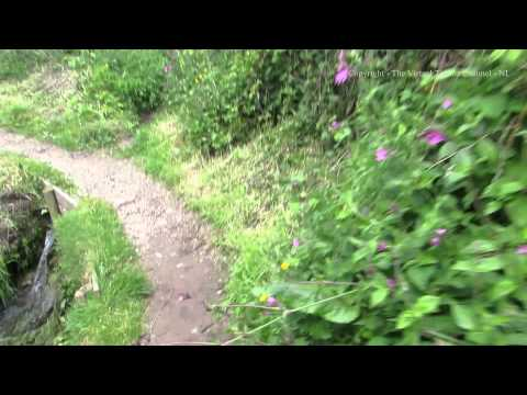 Walk from Lantic Bay to Polruan by Fowey in Cornwall 2