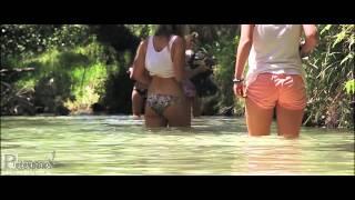 Fraser Island - Dingo