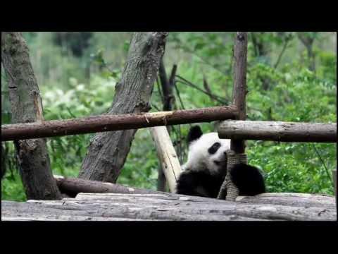 Viaggio in Cina, Shanghai e Sichuan