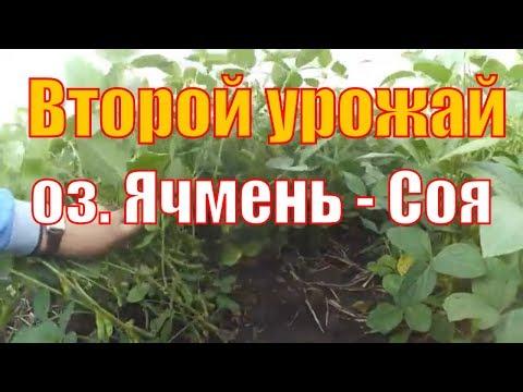Соя - Второй урожай (после оз.ячменя)