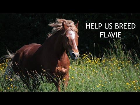 Help Us Breed Flavie