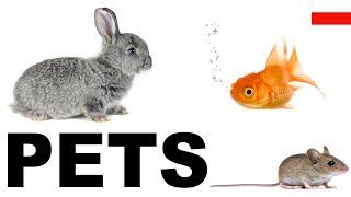 Angielskie słówka w obrazkach - Zwierzęta domowe 2 (Pets)