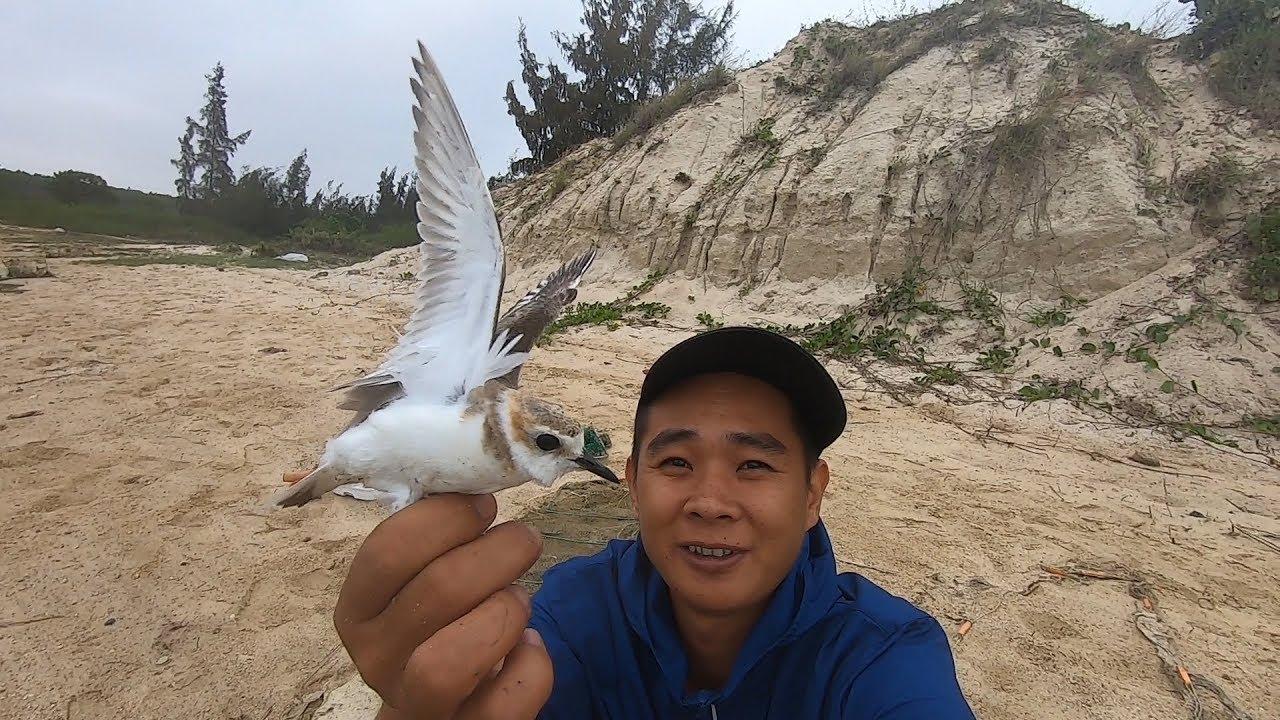 阿波趕海運氣爆棚,竟從廢棄地籠里抓出只飛鳥,這場面頭一次見 - YouTube