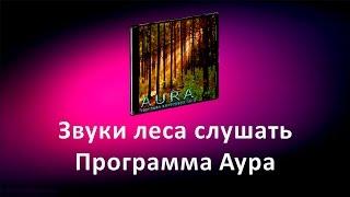 Звуки леса слушать. Программа Аура