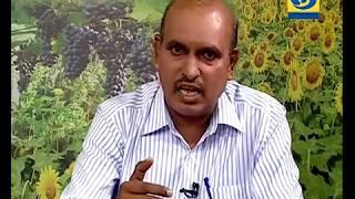 Krishidarshan - 16 May 2018 - कडधान्य उत्पादन वाढीमध्ये कृषी विज्ञान केंद्राचा सहभाग