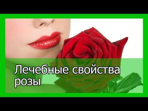 Лечебные свойства обыкновенной розы