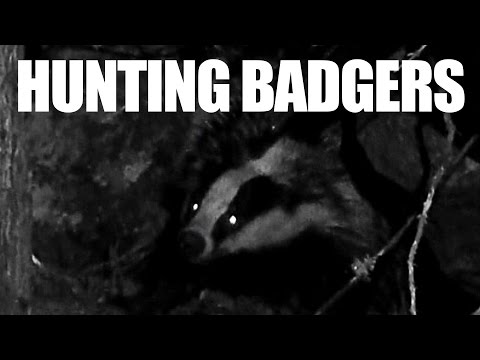 Hunting Badgers