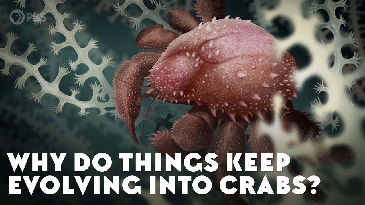 Why Do Things Keep Evolving Into Crabs?