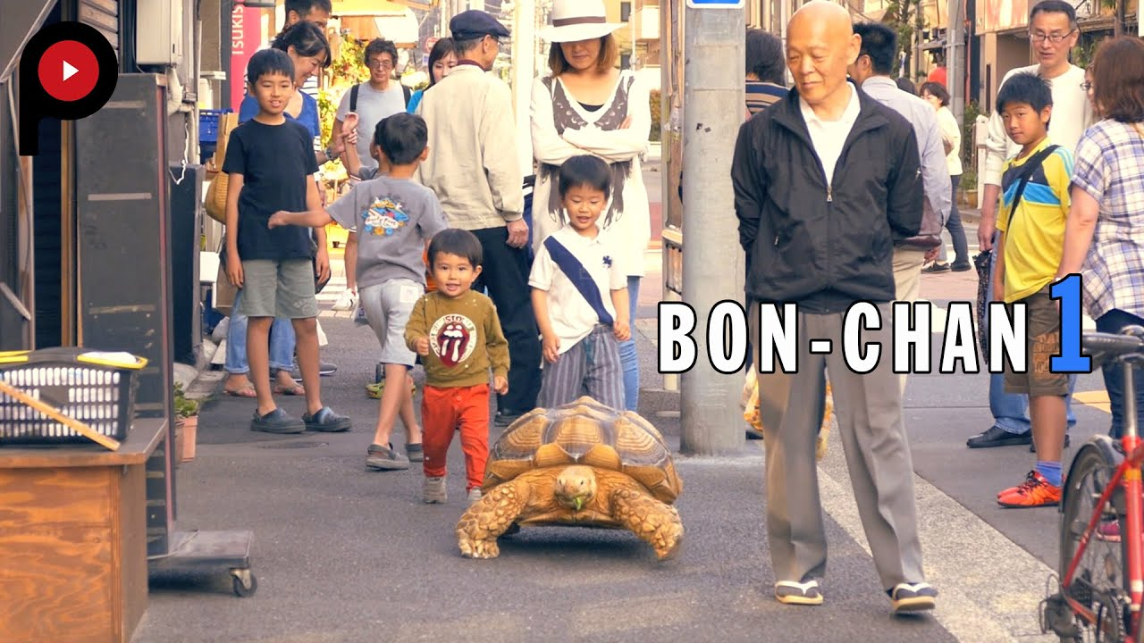 Taking His Tortoise For A Walk In Tsukishima 巨大亀のぼんちゃん - Man walks pet tortoise through tokyo