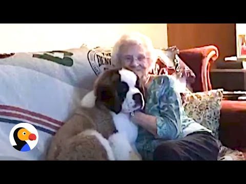Widowed Lady Gets Puppy After Living Alone for 27 Years | The Dodo