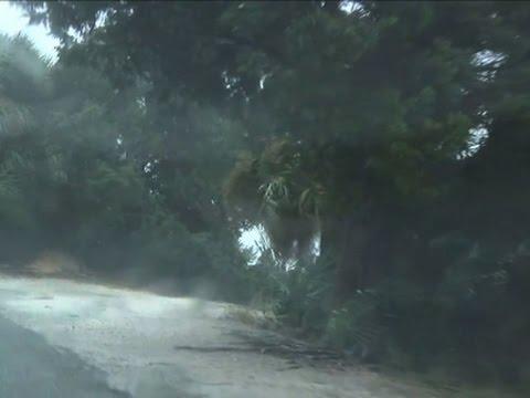 Hurricane Matthew Drenches Georgia Coast