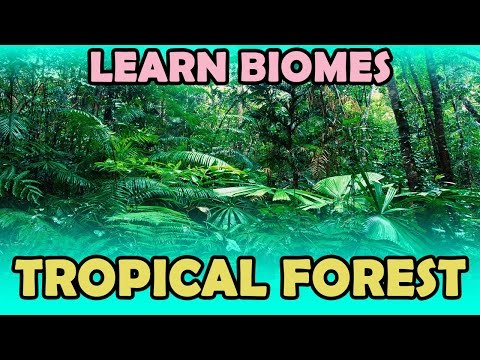 Learn Biomes | Tropical Forest | KidRhymes