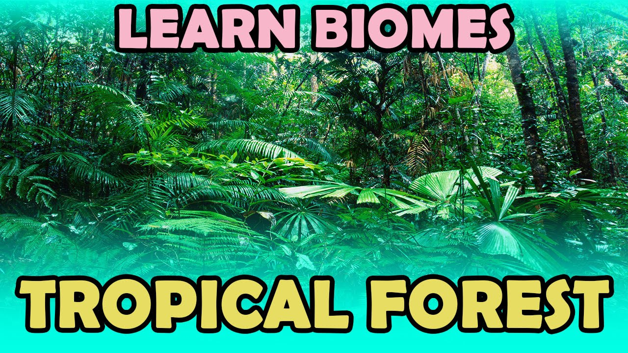 Learn Biomes Tropical Forest Kidrhymes Youtube