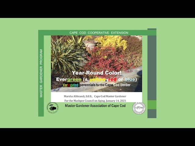 Year-Round Color for the Cape Cod Garden