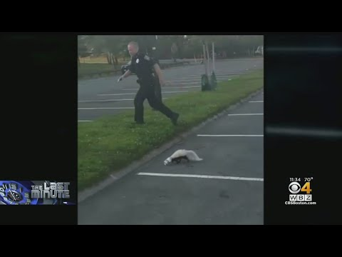 Mark - A cop rescues a skunk from a yogurt cup...and then gets sprayed
