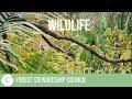 FSC   Wildlife