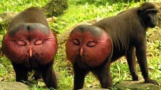 Дикая природа Дикий секс.Животные извращенцы National Geographic Wild