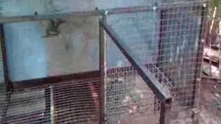 Клетка для нутрий или кроликов