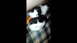 Video My 3 black and white animals download MP3, 3GP, MP4, WEBM, AVI, FLV Juni 2018