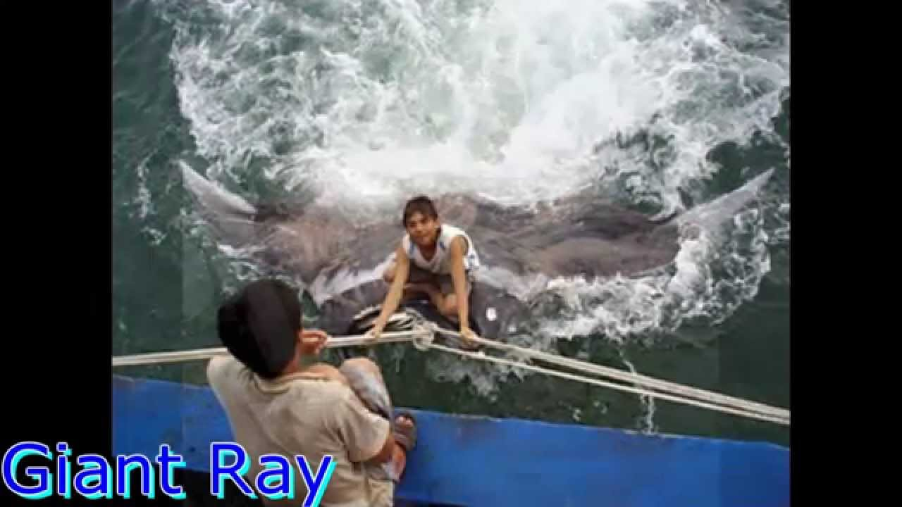 megalodon monster sharks still alive real pics youtube