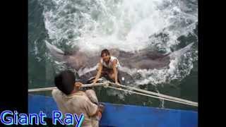 megalodon monster sharks still alive real pics