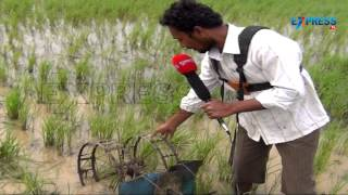 Paddy Cultivation | Drum Seeder uses and other latest implements | Paadi Pantalu | Express TV