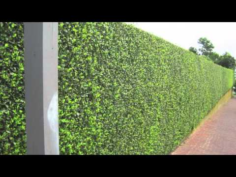 Privacy Hedges - Shipped To All States, No License Needed, L